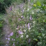 Bloemen in de tuin 2